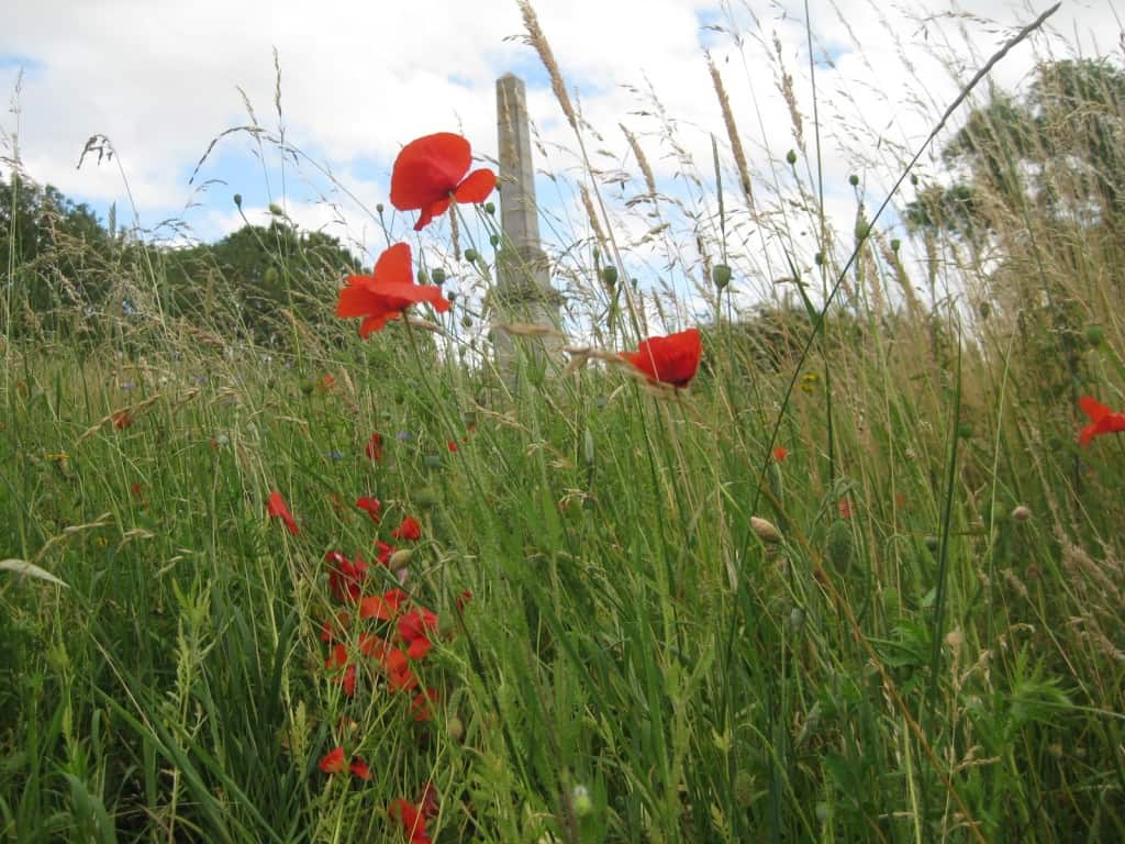 Poppies in Flanders Fields, Belgium