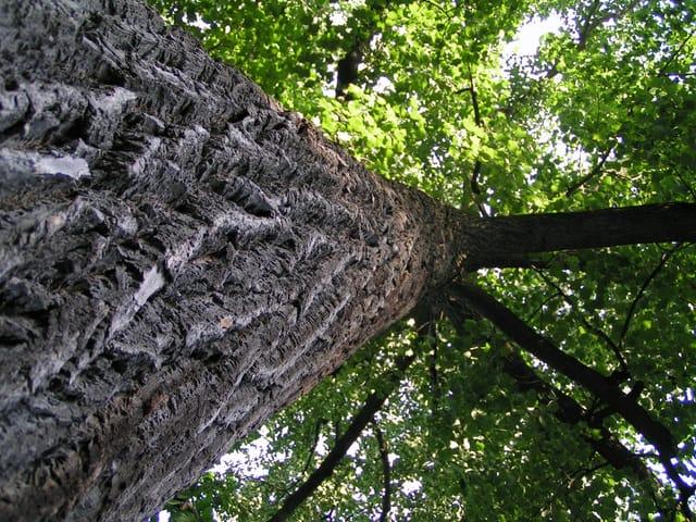 tree-1-1498002-640x480