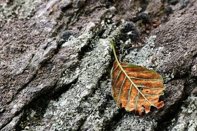 fallen-leaf-2-1504246-639x425