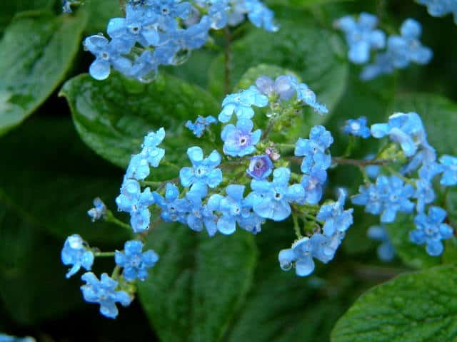 forget-me-not-1452767-640x480